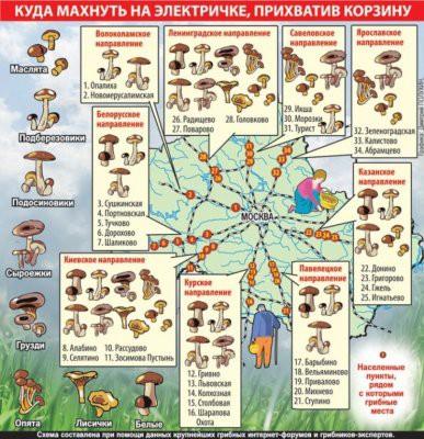 Куда махнуть с лукошком на выходные: Грибная карта Московской области