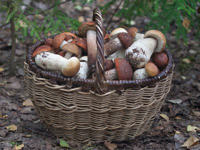 Куда поехать за грибами в Подмосковье на выходные в октябре 2018?