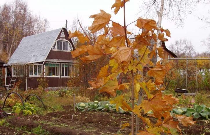 Календарь работ на огороде в октябре, готовим почву к зиме