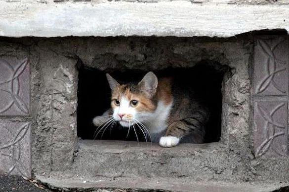 Чиновники озаботились судьбой котов в России