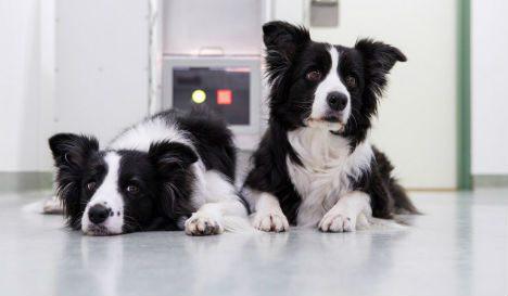 Венские ученые разработали сенсорные игры для собак