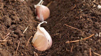 Астрологи составили благоприятные дни для огородников в октябре