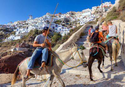 В Греции власти запретили толстым туристам кататься на ослах