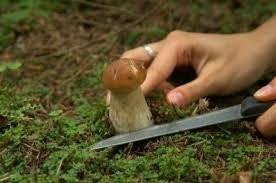 В Роспотребнадзоре рассказали, как правильно собирать грибы