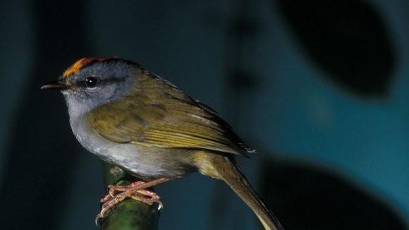 «Эскалатор вымирания»: потепление сокращает популяцию тропических животных