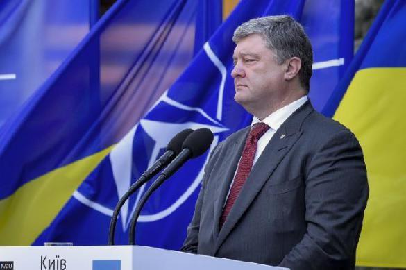 НАТО смеется: «аспирантство» Украины — просто правка на сайте
