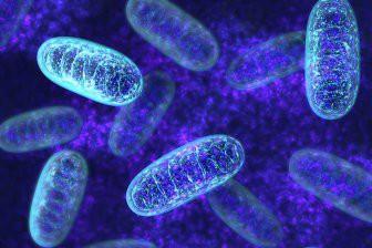 Биологи воссоздали одного из древнейших предков человека