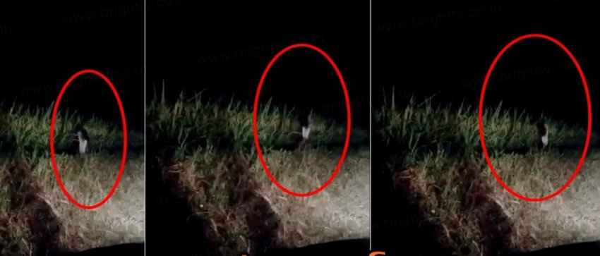В Таиланде сняли на видео одноногого монстра из легенд