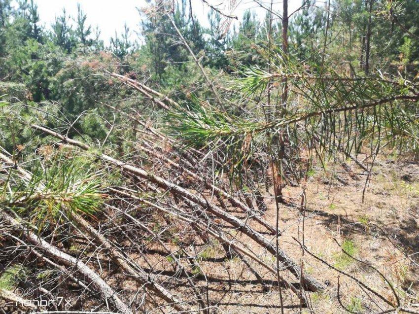 В лесах Самарской области грибники наткнулись на аномальное место