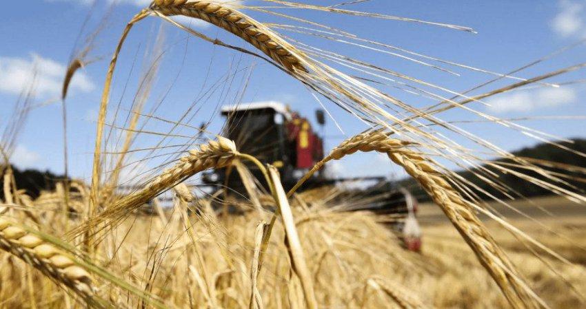 Результаты «зерновых» лидеров по сбору урожая в 2018 году. Что отправят на экспорт Россия и Украина?