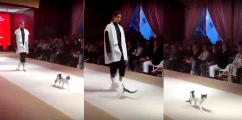 Кошка прошлась по подиуму во время показа мод
