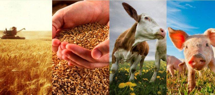 Единый сельскохозяйственный налог, действующий в России в 2018-2019 годах