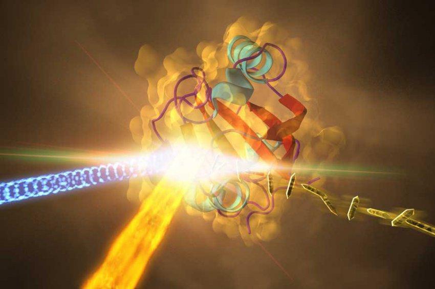 Ученые заподозрили бактерии в использовании квантовой запутанности