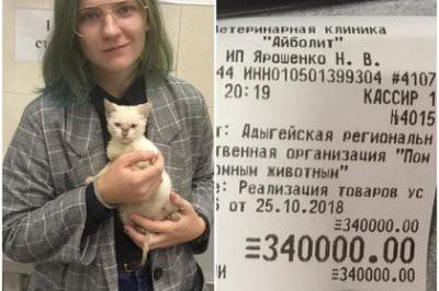 Студентка заплатила 340 тыс рублей чтобы оставить котенка в приюте
