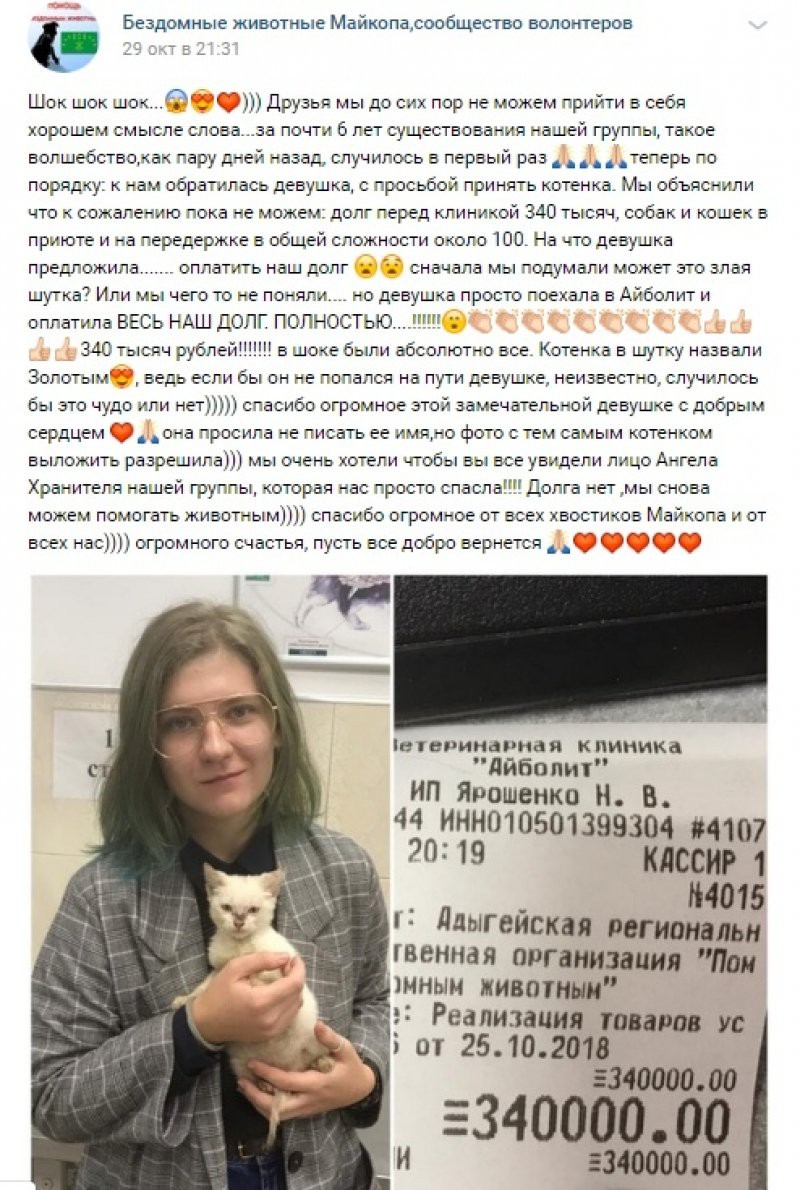«Золотой котенок»: девушка погасила долг приюта для животных в 340 тысяч