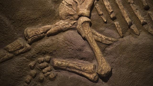 В Аргентине нашли останки ранее не известного науке динозавра | Свежие новости