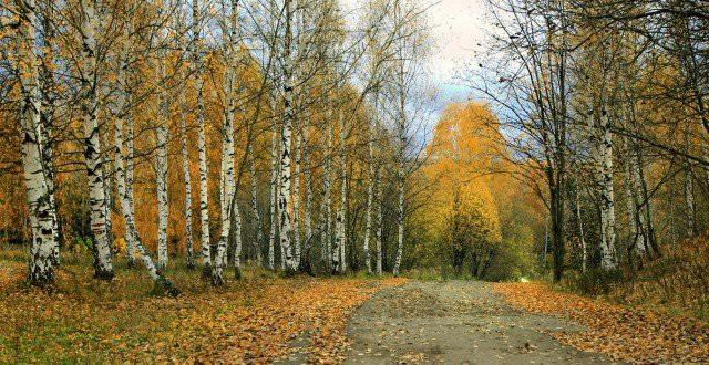 Какой сегодня праздник 22 октября — Белые журавли — российский литературный праздник