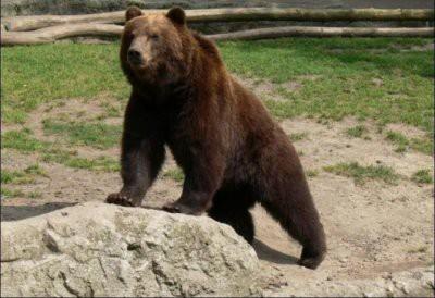 На Камчатке медведь загрыз школьника