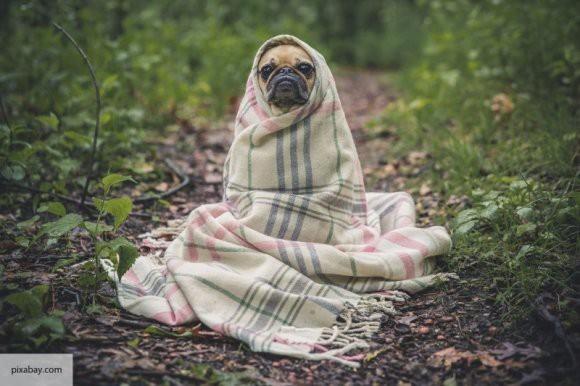 Из России с щенячьей любовью: собаки в Америке появились благодаря сибирякам