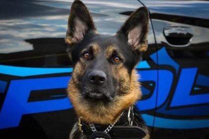 Американец застрелил полицейскую собаку и поплатился жизнью