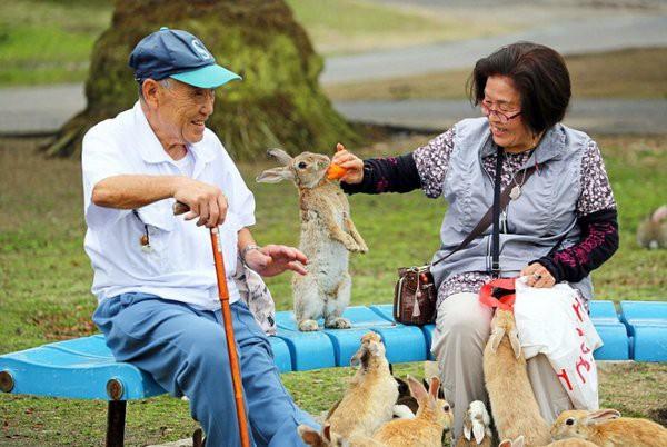 Кроличий остров Окуносима - кусочек мягкого рая на земле