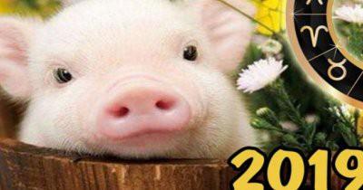 Новый 2019 год – Год Желтой Земляной Свиньи