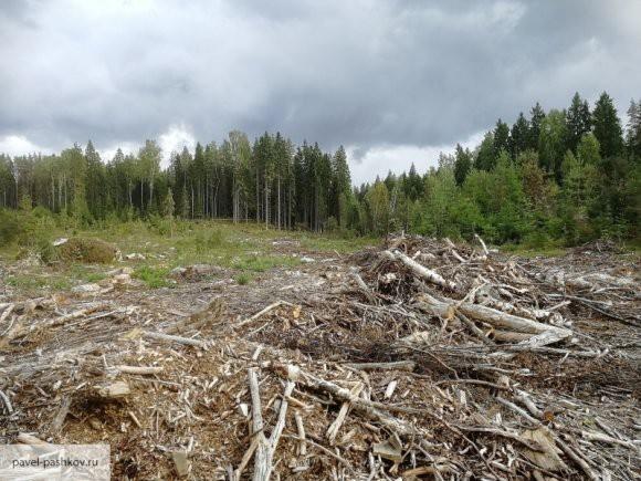 Россия может временно ограничить экспорт древесины в Китай