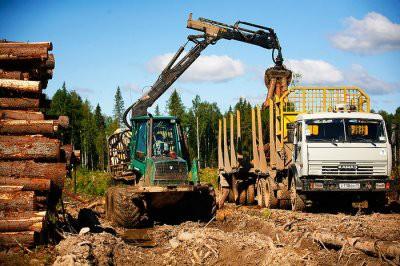 Россия может временно ввести ограничения на экспорт древесины в Китай