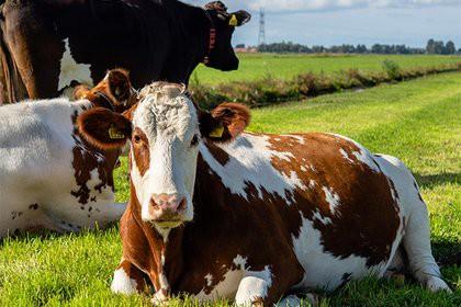 Коровий навоз поставил под угрозу авиасообщение в Эстонии