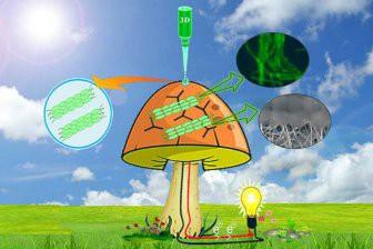 Американские ученые превратили грибы в бионические генераторы электричества