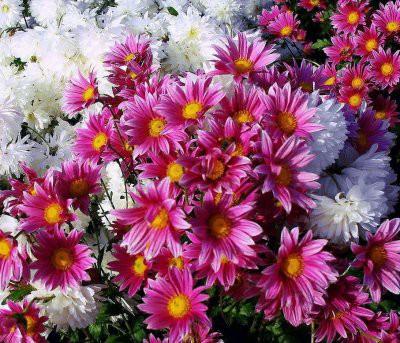 Благоприятные дни для посадки цветов в ноябре 2018 по лунному календарю