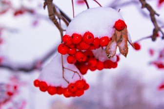 Депутат Рады предложил «запретить зиму»