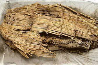 Учёные: Расшифрована ДНК самой древней мумии Нового Света