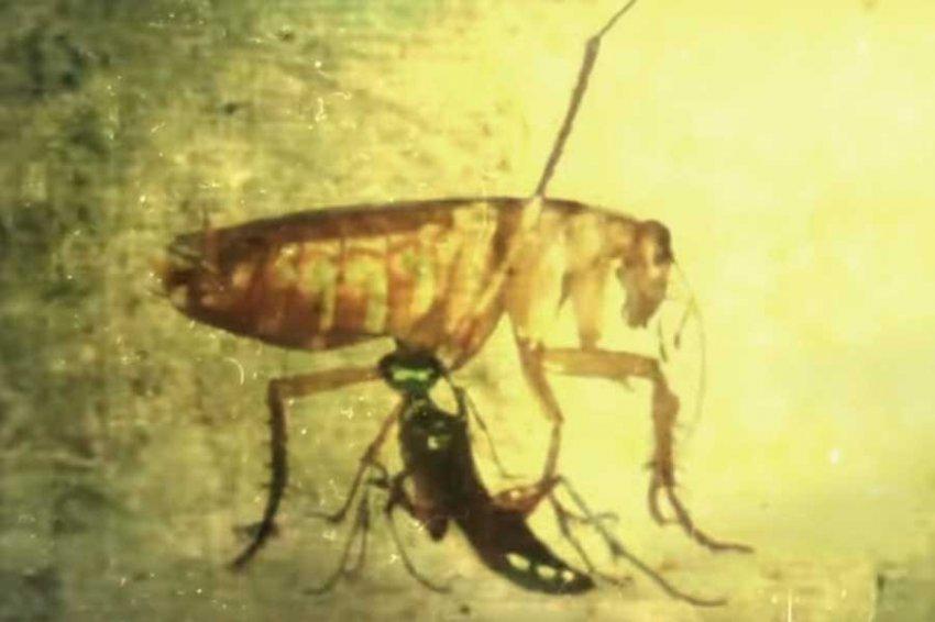 Учёные: Тараканы используют карате, чтобы не стать зомби