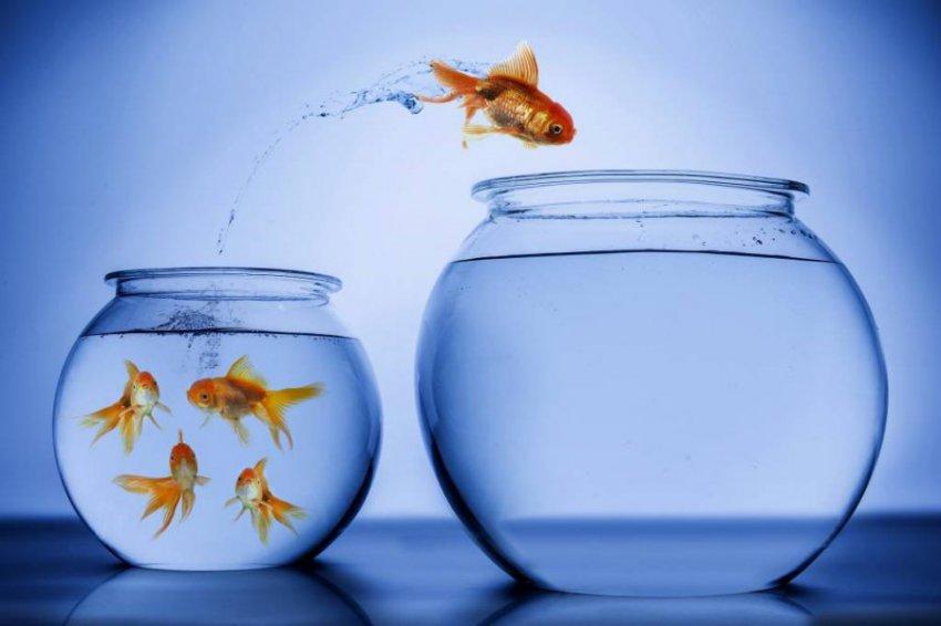 Выход из зоны комфорта: практическое руководство