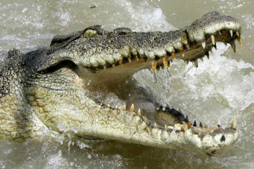 Житель США прыгнул в бассейн с крокодилами и пожалел