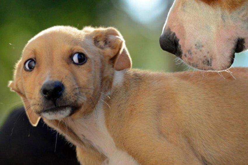 Ученые выявили природу возникновения тревожности у собак