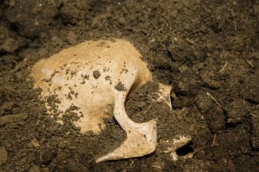 В лагере древних галлов обнаружили черепа со следами бальзамирования