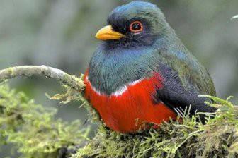 Учёные узнали причину цветового разнообразия перьев птиц