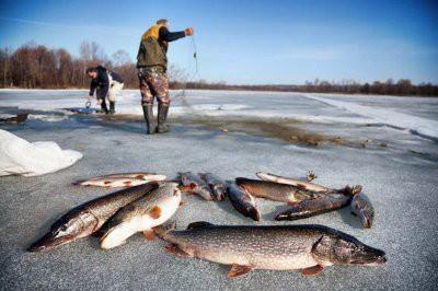 Госдума приняла закон о любительском рыболовстве