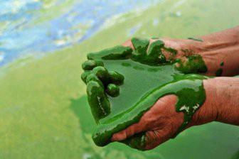 Ученые рассказали об опасных мертвых зонах в городских водоемах