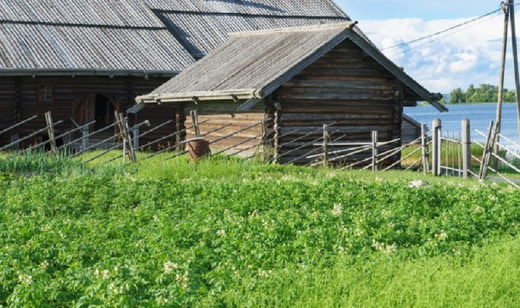 Госдума одобрила налог на огород - подробности, последние новости