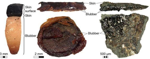 В окаменевших останках ихтиозавра неожиданно нашли следы кожи и жира