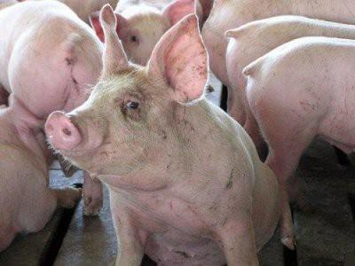 Россельхознадзор запретил поставки кормов для животных из Китая