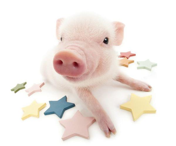 Что готовит нам 2019 год свиньи, чего ожидать по знакам зодиака