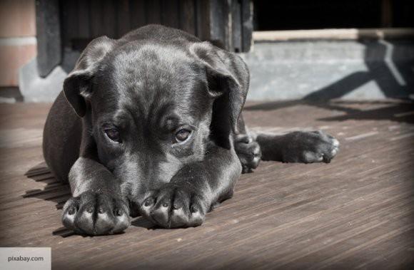 Госдума приняла закон об обращении с животными