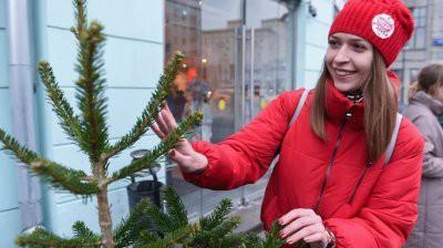 Почти 270 елочных базаров открылось в Москве