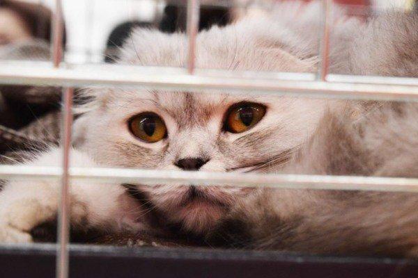 Чиновники одобрили закон о правилах поведения с животными