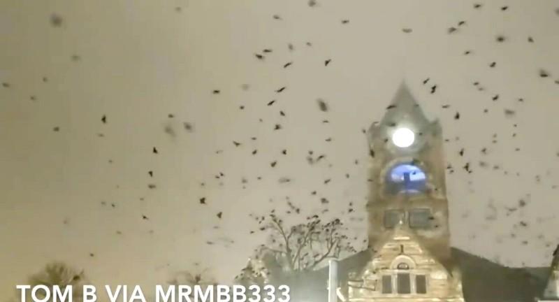 Огромная стая ворон кружила над церковью перед приходом торнадо