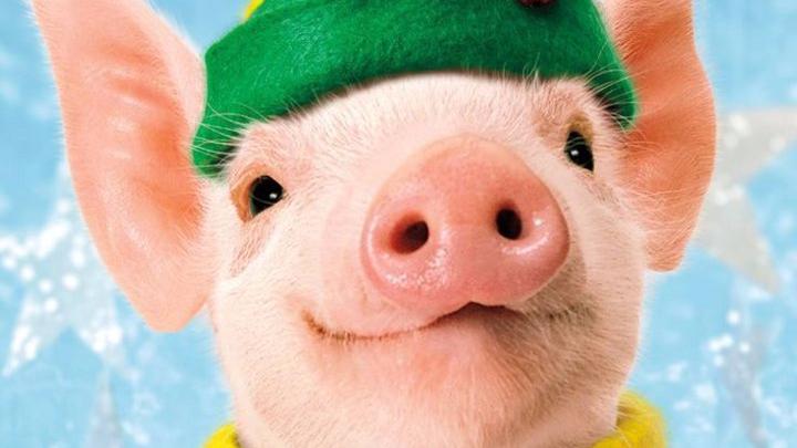 Деньги и удача: что нам принесет год Свиньи